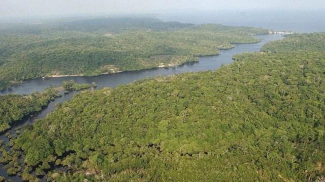 Creció significativamente la deforestación del Amazonía con la llegada de Bolsonaro al poder en Brasil