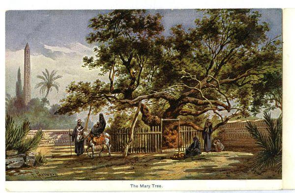 Según la tradición, en varios sitios se conservan árboles a cuya sombra descansaron María y el niño Jesús