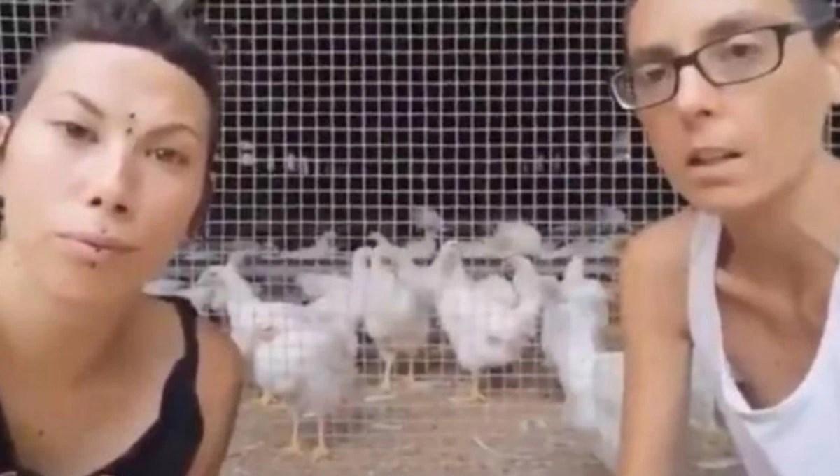 """Almas Veganas: el colectivo de animalistas que no junta gallos con gallinas porque """"no quieren que las violen"""""""