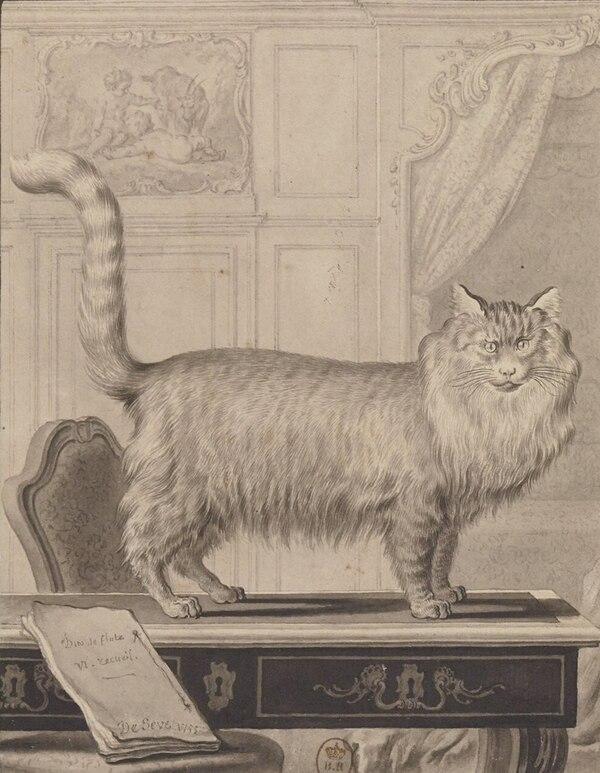 El gato de Angora, ilustración de la obra de Historia natural, general y particular, con la descripción del gabinete del rey, George Louis Leclerc, conde de Buffon, De Seeve (dibujo), 1755, BnF, Paris.