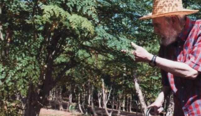 Fidel Castro con las moringasque cultivaba en su casa, en 2012, cuando publicó su extraña apología del árbol.(Axel Castro)