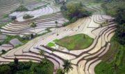 rice terraces Bohol Philippines
