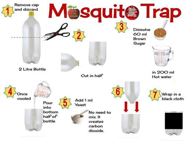 bohol-mosquito-trap
