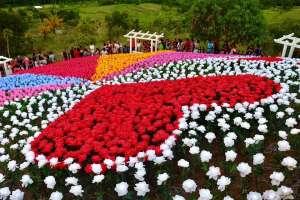 Jardin Necitas Glowing Garden Pilar Bohol Philippines 0001