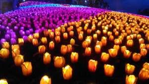 Jardin Necitas Glowing Garden Pilar Bohol Philippines 0002