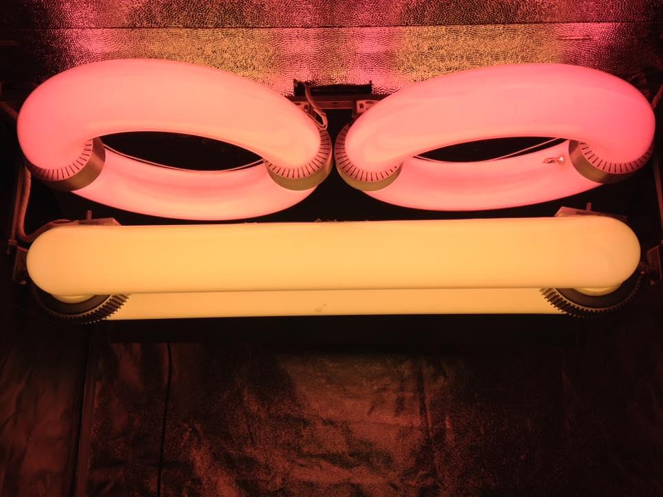 Lámparas de inducción magnética, el futuro en el cultivo en interior