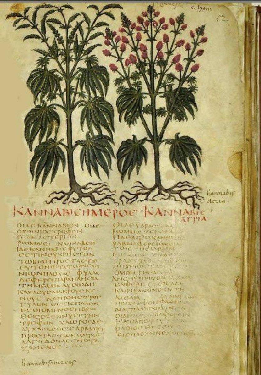 El cannabis en la antigua Grecia