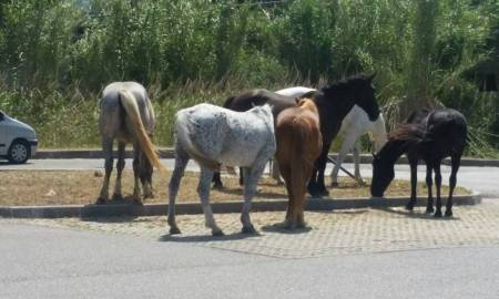 cavalli_strada