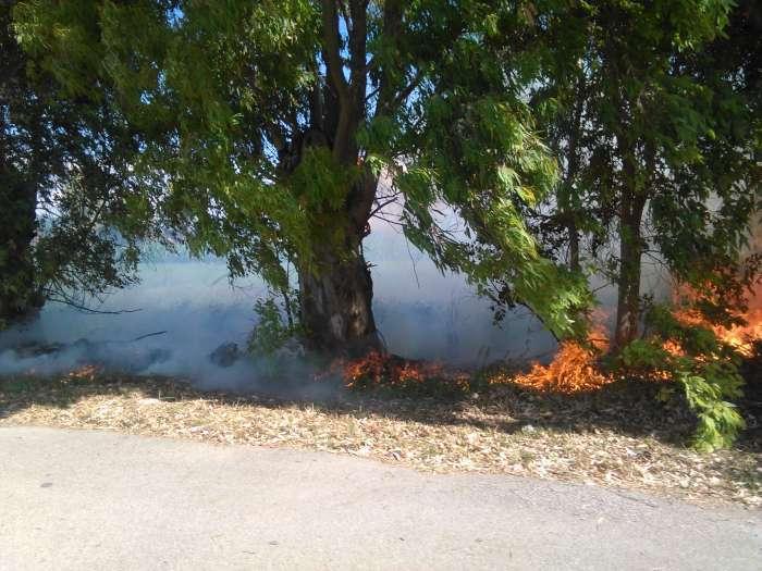incendio_capaccio3-700