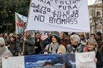 biomasse_capaccio_45