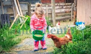 bambina_fattoria
