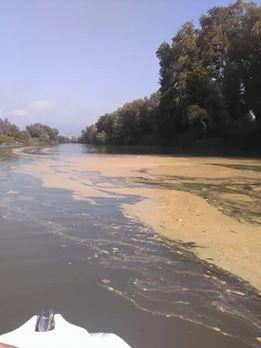 Allarme inquinamento nel fiume sele schiuma e liquami - Da roma porta verso il mare ...