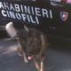 carabinieri_droga_cani