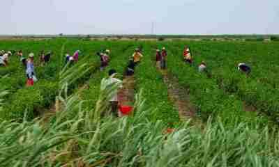 Bolivianos explotados en la quinta de Frutos Rojos