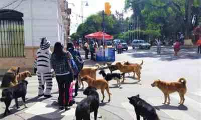 Esterilización_canina