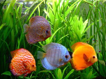 information sur les poissons