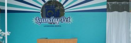 Brasileiro cria lavandaria especializada em animais de estimação
