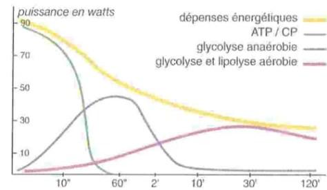 filieres energetiques ATP