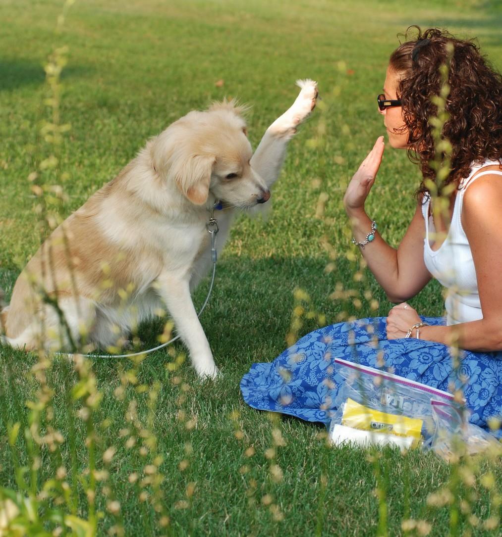Jak pies spędza urlop? Z panem lub w hotelu