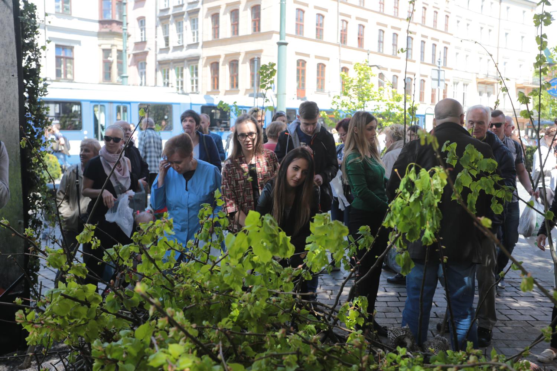 Bezpłatne sadzonki lipy trafiły do mieszkańców Krakowa