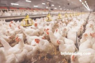 Complete Guide On How To Start A Lucrative Poultry Farming Business
