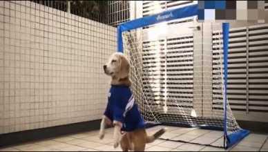 purin le chien gardien de de but