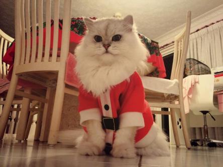 Chat Père-Noël