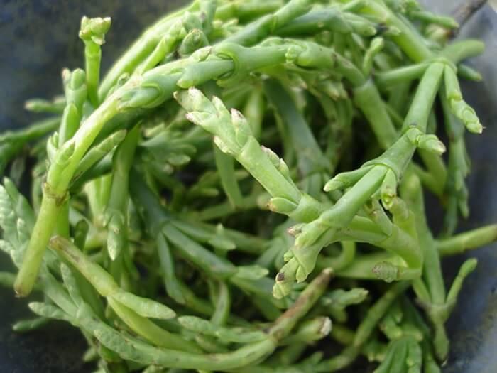 fruits-legumes-etranges-27