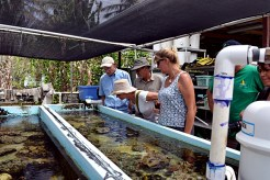 Visitors check out some of the brood stock at The Clam Farm. Photo: Karen Earnshaw