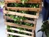 frutta-e-verdura-domenico-bilancio_13