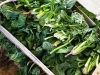 frutta-e-verdura-domenico-bilancio_8
