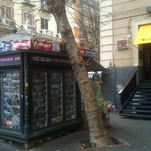 Napoli: l'albero pendente di piazza Vanvitelli