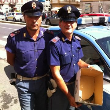 Napoli, polizia salva una rondinella caduta dal nido