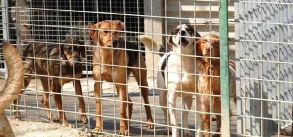 Roma, canile Parrelli: sequestro preventivo della struttura e degli animali