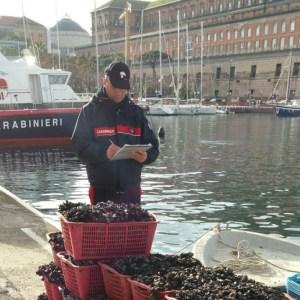 Napoli, carabinieri sequestrano tonnellate di mitili illegali