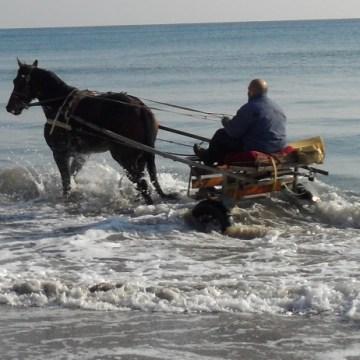 A spasso col calesse sulla spiaggia per allenare il cavallo. Sanzione e quarantena per un 44enne
