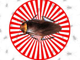 Cockroach Repellent App, App Can Repel Cockroaches