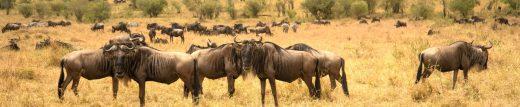 The Pandemic Poachers