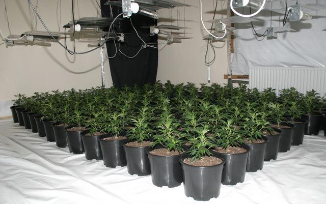 Une Culture De Cannabis Dcouverte Grce Une Fuite Deau