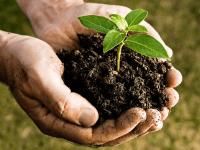 peluang usaha pupuk kompos