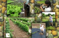 Curs acreditat de agricultura ecologica