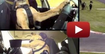 Perros que conducen. . .el 2013 se presenta muy interesante!!