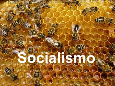 colmena-socialismo