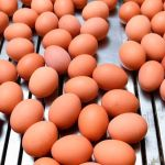 5 Ways On How You Can Start Up Eggs Supply Business In Nigeria