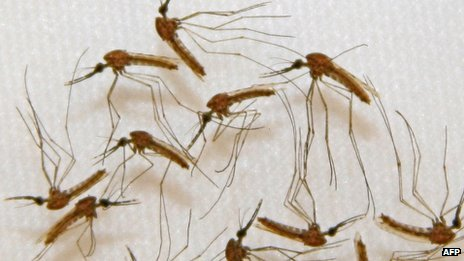 Here Are 5 Life-threatening Problems Caused By Malaria - INFORMATION NIGERIA