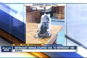 Colorado-man-brings-stuffed-owl-to-court-as-defense-counsel