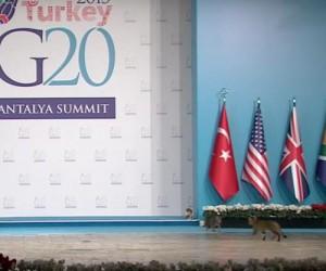 Stray-cats-crash-Turkeys-G20-summit