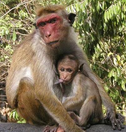 Monkeys Swallow N70m Of Northern Senators Forum Money