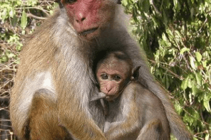 Monkeys swallow N70m belonging to Northern Senators Forum