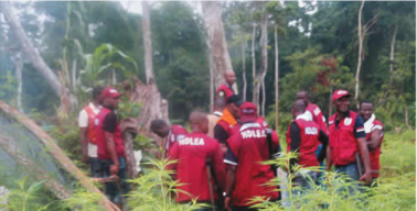 Image result for NDLEA destroys 1,323 hectares of Indian hemp farm